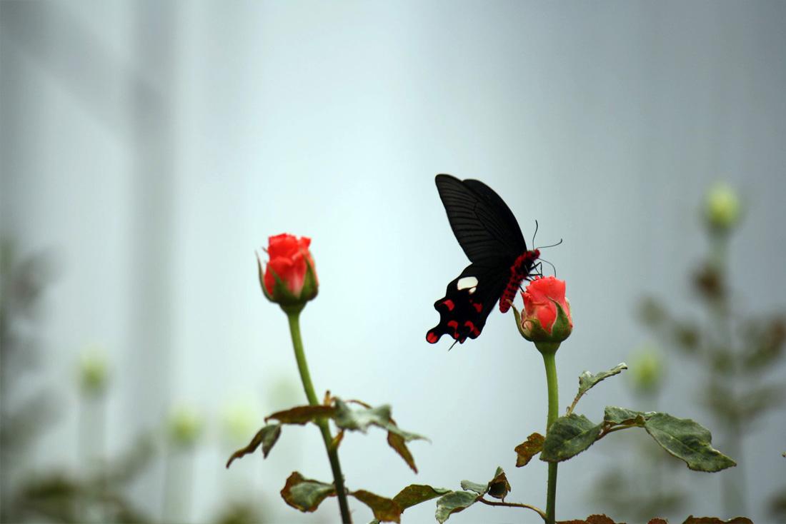 Butterfly enjoying the nectar