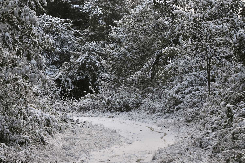 Snowfall at Eaglenest Wildlife Sanctuary by Rohan Pandit